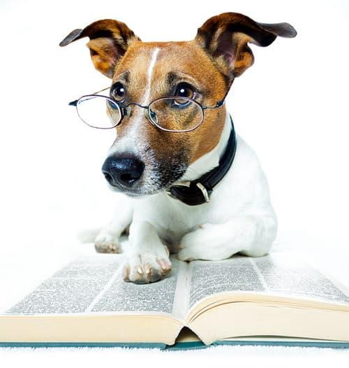 dog-reading-a-book