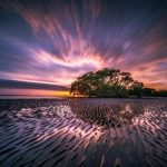 landsape beauty tide sunset tree 1024x682 1