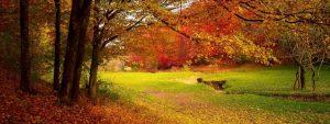 falling leaves 1024x384 1