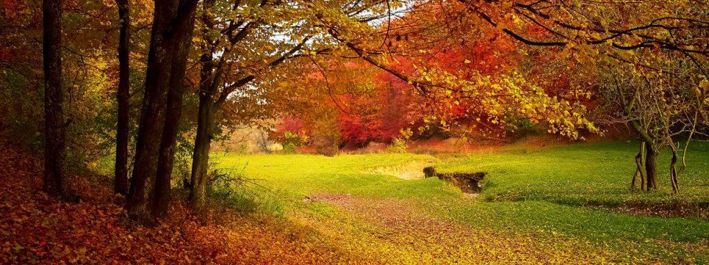 falling_leaves-1024x384-1