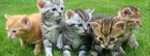 Five Kittens on Grass 1280x480 1024x384 1
